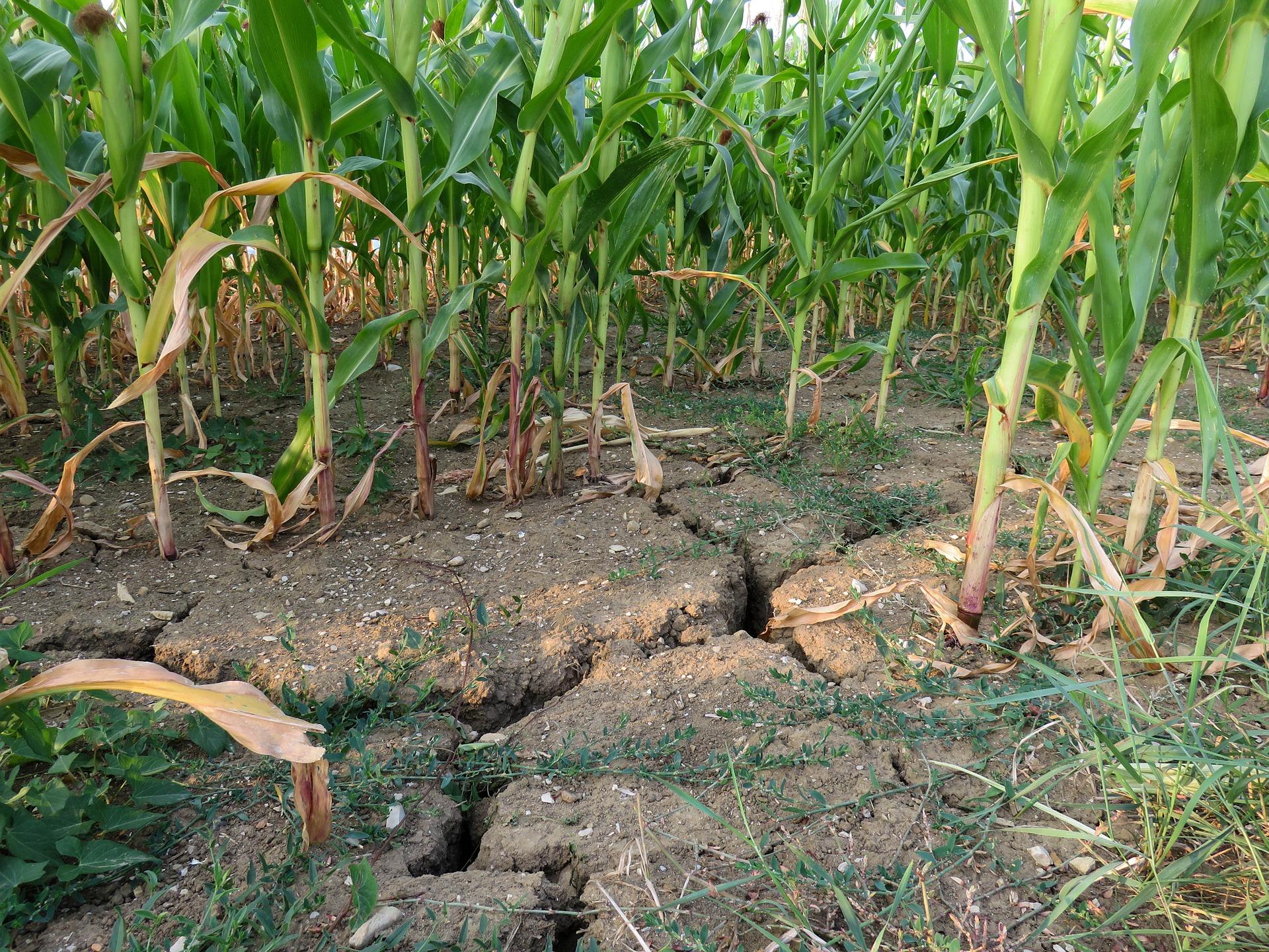 susza-ziemia-uprawy