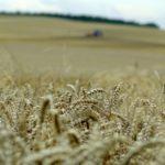 Gminna impreza nie tylko dla rolników