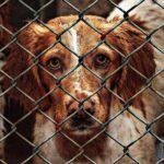 Psy z gminnego przytuliska również zasługują na upominki