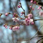 Przywitaj wiosnę w Parku Narodowym