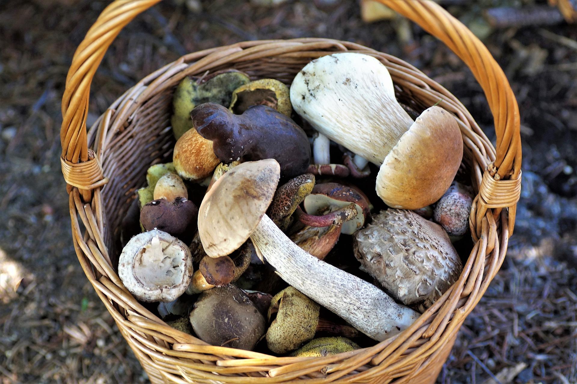 kosz z grzybami