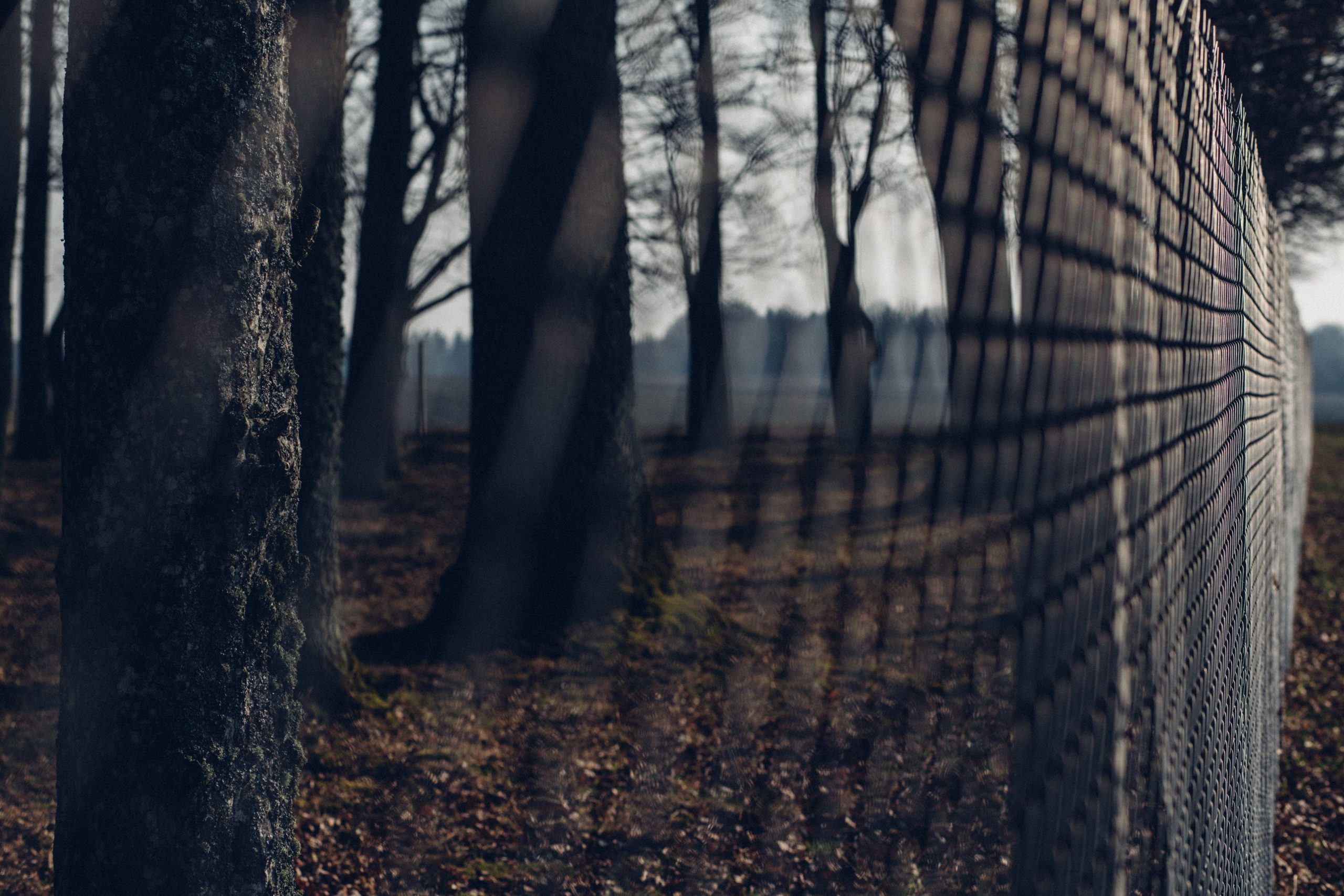 ogrodzenie w lesie - tereny zakażone